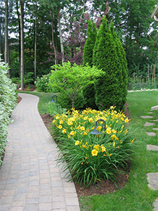Minimize Your Gardening Time With Low Maintenance Shrubs And Trees