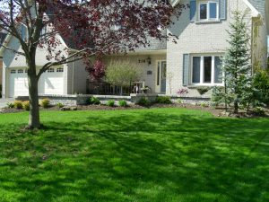 front yard landscaping, trees, shrubs, gardens