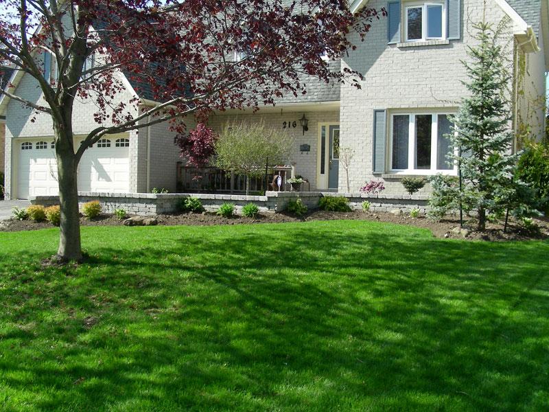 front yard landscaping, trees, shrubs, gardens