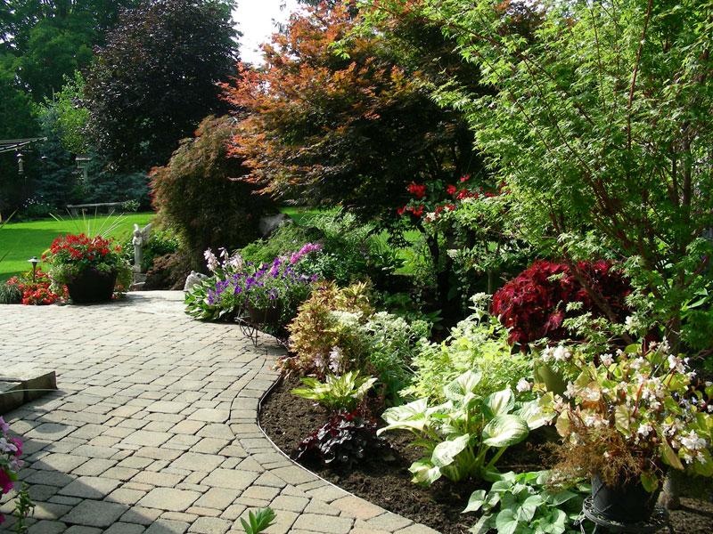 backyard landscaping, trees, shrubs, gardens