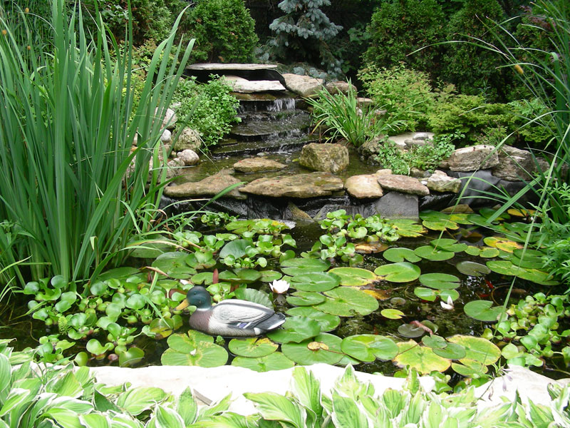 rock garden landscaping, water falls, pond