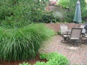 backyard landscaping, trees, shrubs, interlocking patio
