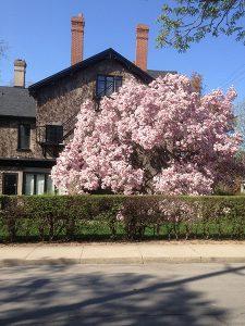 Low maintenance front yard landscaping trees shrubs